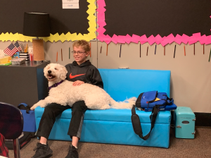 Comfort dog with student